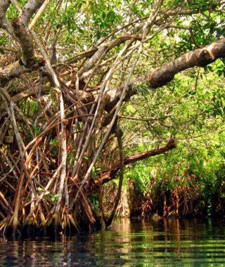 entrada 4 blog puerto morelos